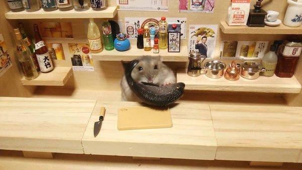 Tham quan quán bar siêu ngộ nghĩnh của những chú chuột Hamster đáng yêu 7
