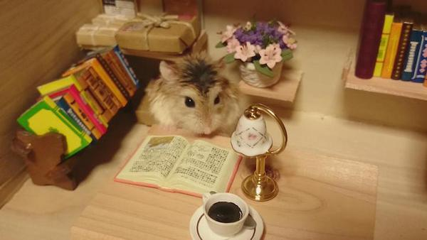 Tham quan quán bar siêu ngộ nghĩnh của những chú chuột Hamster đáng yêu 8