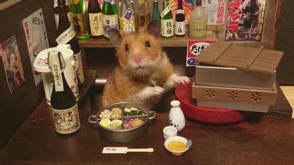 Tham quan quán bar siêu ngộ nghĩnh của những chú chuột Hamster đáng yêu 2