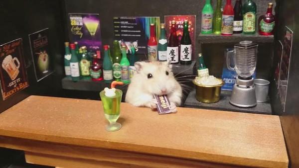 Tham quan quán bar siêu ngộ nghĩnh của những chú chuột Hamster đáng yêu 4