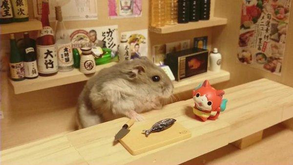 Tham quan quán bar siêu ngộ nghĩnh của những chú chuột Hamster đáng yêu 9