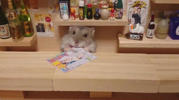 Tham quan quán bar siêu ngộ nghĩnh của những chú chuột Hamster đáng yêu 11