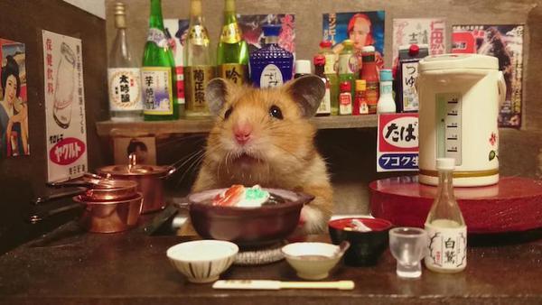 Tham quan quán bar siêu ngộ nghĩnh của những chú chuột Hamster đáng yêu 12