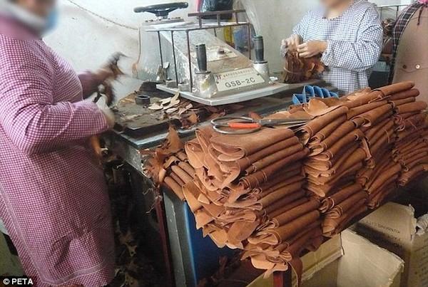 Trung Quốc: Kinh hoàng lò giết mổ chó để sản xuất găng tay da 5