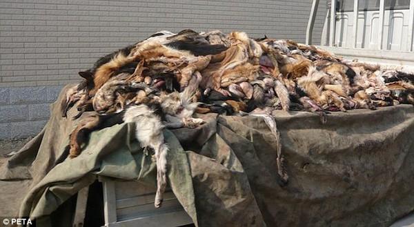Trung Quốc: Kinh hoàng lò giết mổ chó để sản xuất găng tay da 4