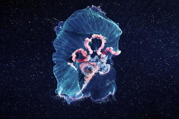 Dừng hình trước khoảnh khắc đẹp kỳ ảo của sứa biển 7