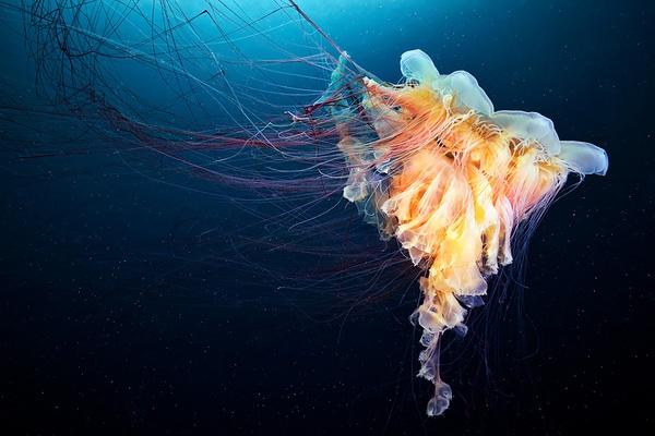 Dừng hình trước khoảnh khắc đẹp kỳ ảo của sứa biển 19