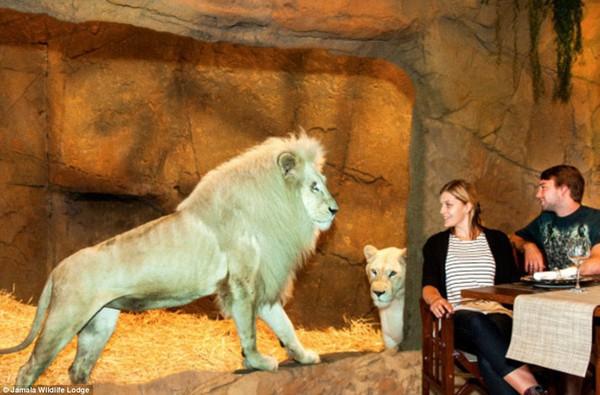 Thử lòng gan dạ tại khách sạn tắm cùng gấu, ăn cùng sư tử... 2