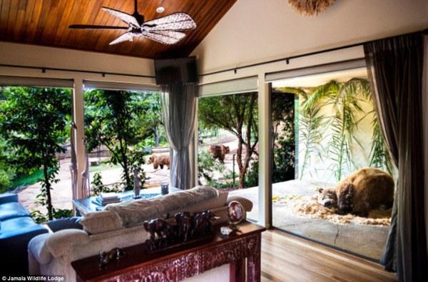 Thử lòng gan dạ tại khách sạn tắm cùng gấu, ăn cùng sư tử... 3