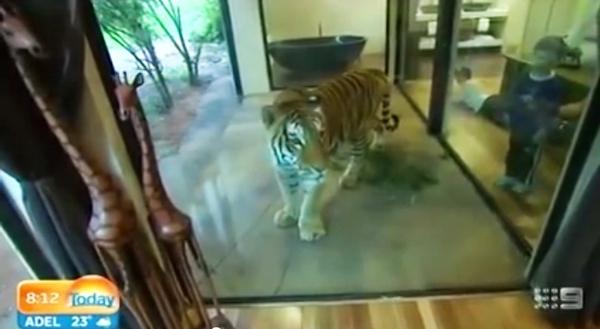 Thử lòng gan dạ tại khách sạn tắm cùng gấu, ăn cùng sư tử... 5