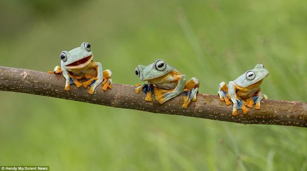 """Thích thú với bộ ảnh ba chú ếch tinh nghịch ngoác miệng """"cười thả ga"""" 3"""