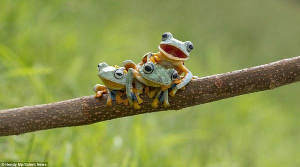 """Thích thú với bộ ảnh ba chú ếch tinh nghịch ngoác miệng """"cười thả ga"""