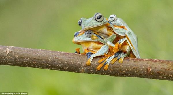 """Thích thú với bộ ảnh ba chú ếch tinh nghịch ngoác miệng """"cười thả ga"""" 1"""