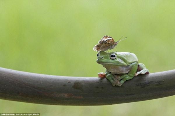 """Thích thú với bộ ảnh ba chú ếch tinh nghịch ngoác miệng """"cười thả ga"""" 10"""