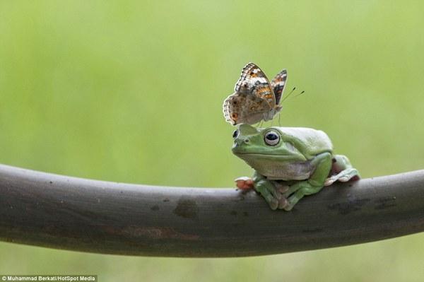 """Thích thú với bộ ảnh ba chú ếch tinh nghịch ngoác miệng """"cười thả ga"""" 9"""