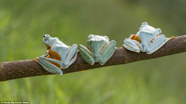"""Thích thú với bộ ảnh ba chú ếch tinh nghịch ngoác miệng """"cười thả ga"""" 8"""