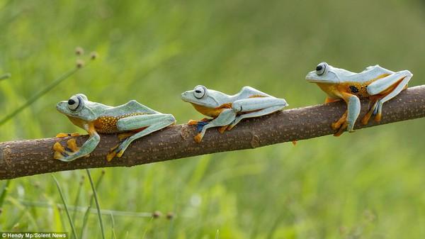 """Thích thú với bộ ảnh ba chú ếch tinh nghịch ngoác miệng """"cười thả ga"""" 7"""