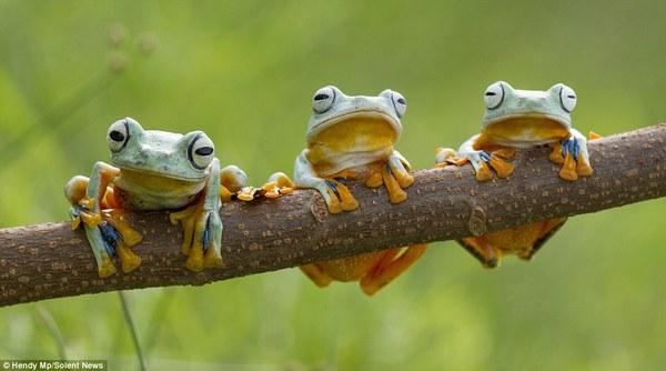 """Thích thú với bộ ảnh ba chú ếch tinh nghịch ngoác miệng """"cười thả ga"""" 6"""