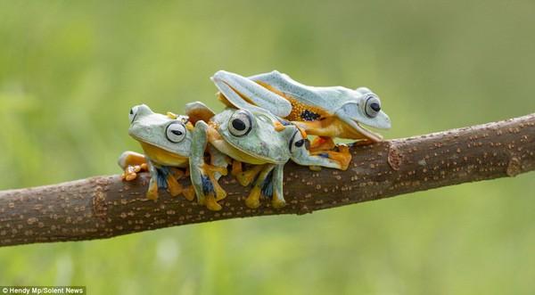 """Thích thú với bộ ảnh ba chú ếch tinh nghịch ngoác miệng """"cười thả ga"""" 4"""