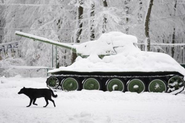 Những hình ảnh đáng sợ về giá lạnh bất thường tại Nga 20