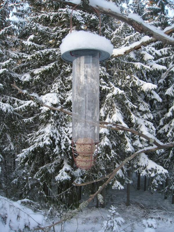 Những hình ảnh đáng sợ về giá lạnh bất thường tại Nga 24