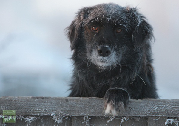 Những hình ảnh đáng sợ về giá lạnh bất thường tại Nga 10