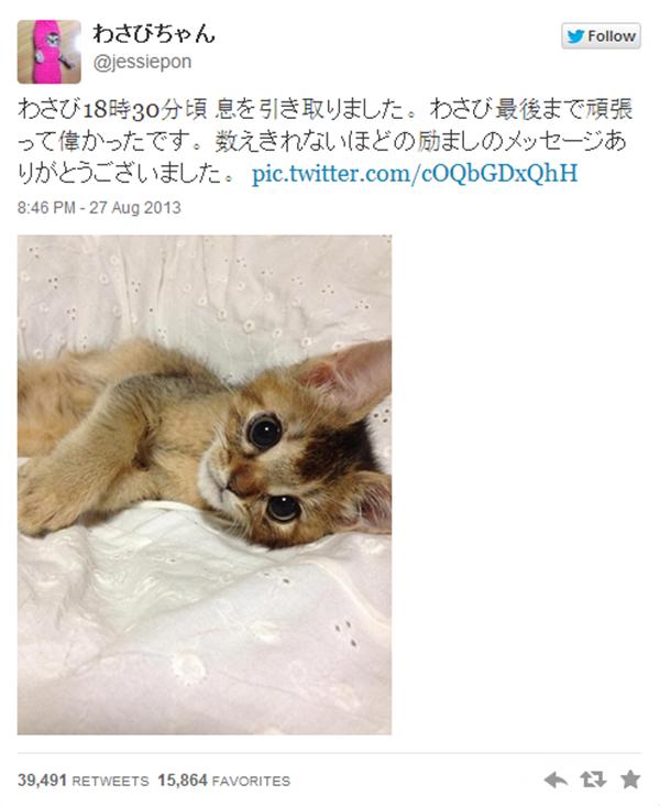 Chú mèo nổi tiếng có 100.000 người follow đã qua đời 8