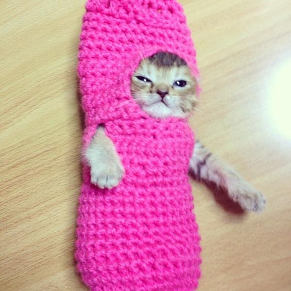 Chú mèo nổi tiếng có 100.000 người follow đã qua đời 2
