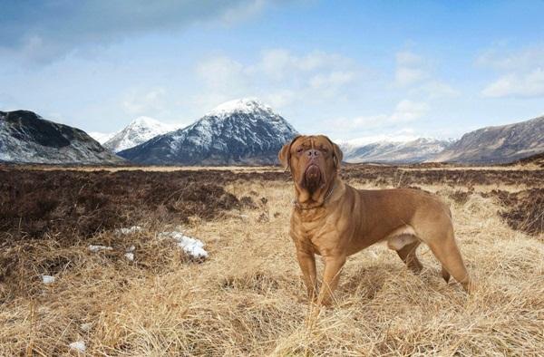 Những bức ảnh chó cưng đẹp nhất 2013 13