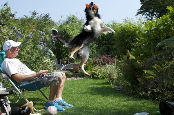 Những bức ảnh chó cưng đẹp nhất 2013 3