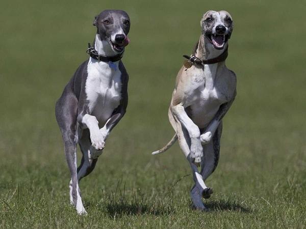 Những bức ảnh chó cưng đẹp nhất 2013 8