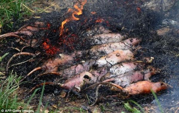 Chùm ảnh: Cảnh chế biến thịt chuột tại Việt Nam lên báo nước ngoài 2