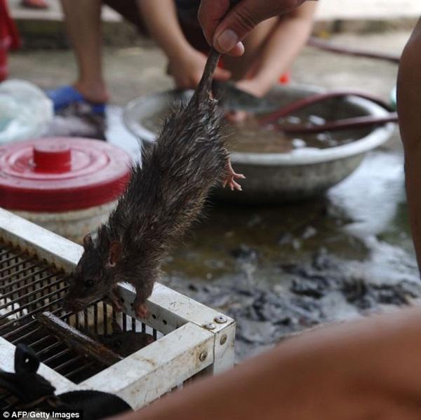 Chùm ảnh: Cảnh chế biến thịt chuột tại Việt Nam lên báo nước ngoài 9