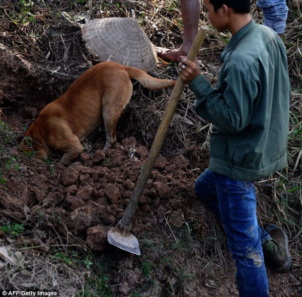 Chùm ảnh: Cảnh chế biến thịt chuột tại Việt Nam lên báo nước ngoài 5