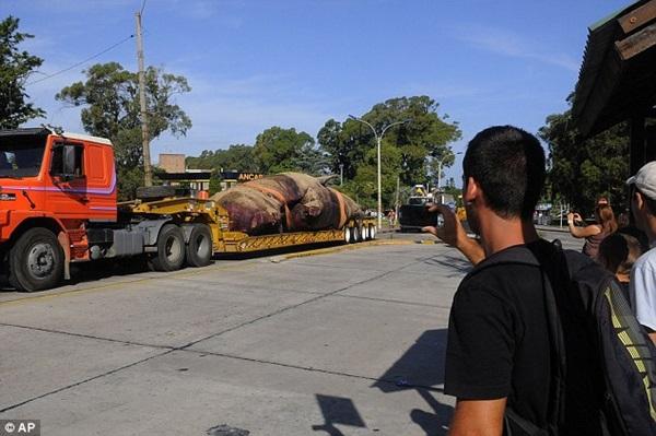 Vật vã vận chuyển xác cá voi nặng 25 tấn về nơi chôn cất 5