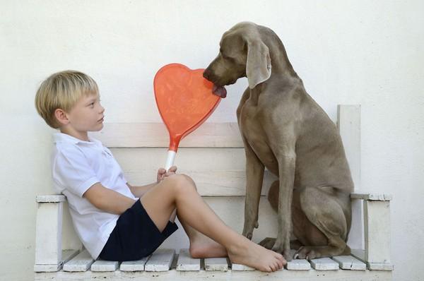 Chú chó tạo dáng chụp ảnh trên Instagram có 3,5 triệu fan 24