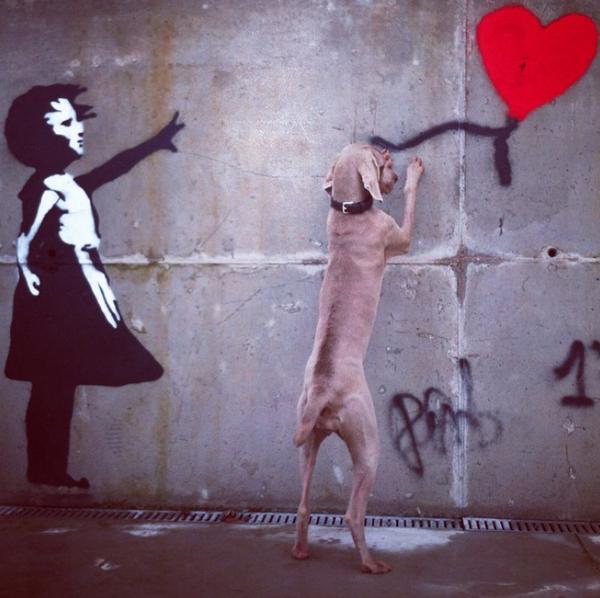 Chú chó tạo dáng chụp ảnh trên Instagram có 3,5 triệu fan 20