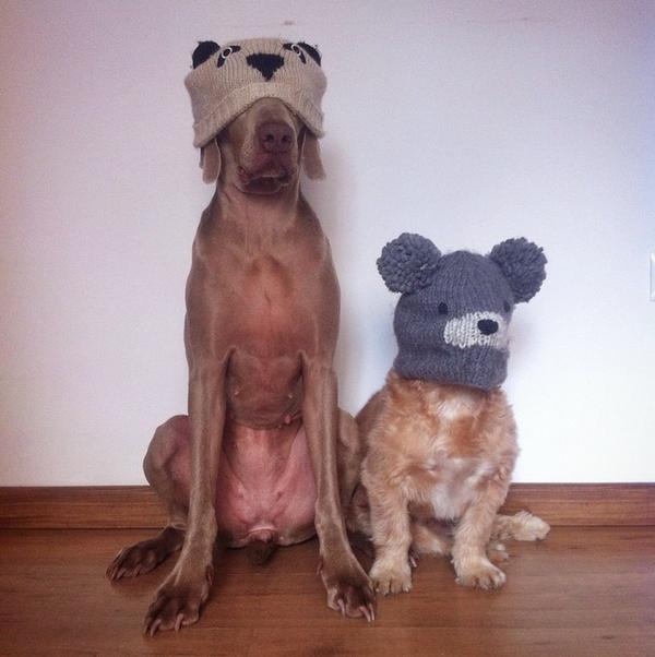 Chú chó tạo dáng chụp ảnh trên Instagram có 3,5 triệu fan 21