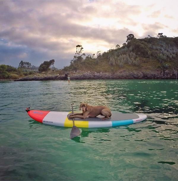 Chú chó tạo dáng chụp ảnh trên Instagram có 3,5 triệu fan 13