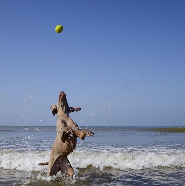 Chú chó tạo dáng chụp ảnh trên Instagram có 3,5 triệu fan 14