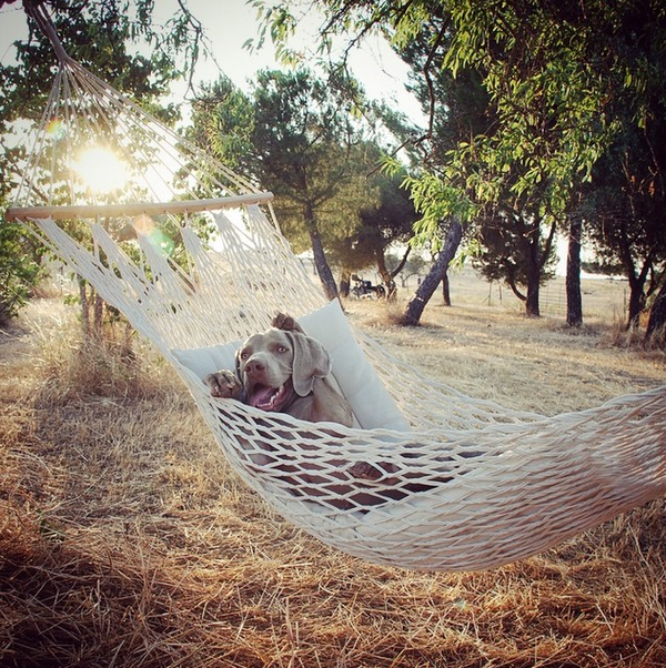 Chú chó tạo dáng chụp ảnh trên Instagram có 3,5 triệu fan 15