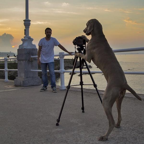 Chú chó tạo dáng chụp ảnh trên Instagram có 3,5 triệu fan 4