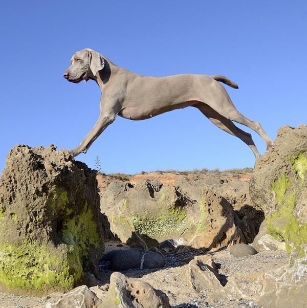 Chú chó tạo dáng chụp ảnh trên Instagram có 3,5 triệu fan 17