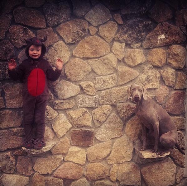 Chú chó tạo dáng chụp ảnh trên Instagram có 3,5 triệu fan 18
