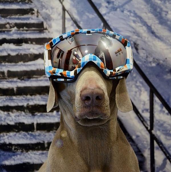 Chú chó tạo dáng chụp ảnh trên Instagram có 3,5 triệu fan 19