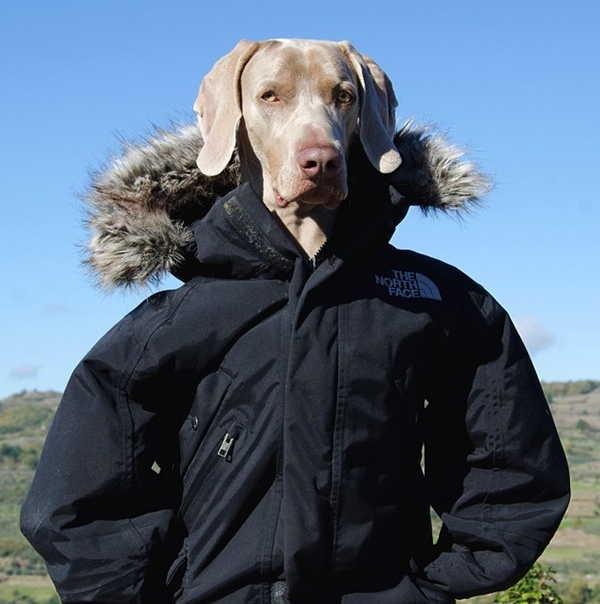 Chú chó tạo dáng chụp ảnh trên Instagram có 3,5 triệu fan 6