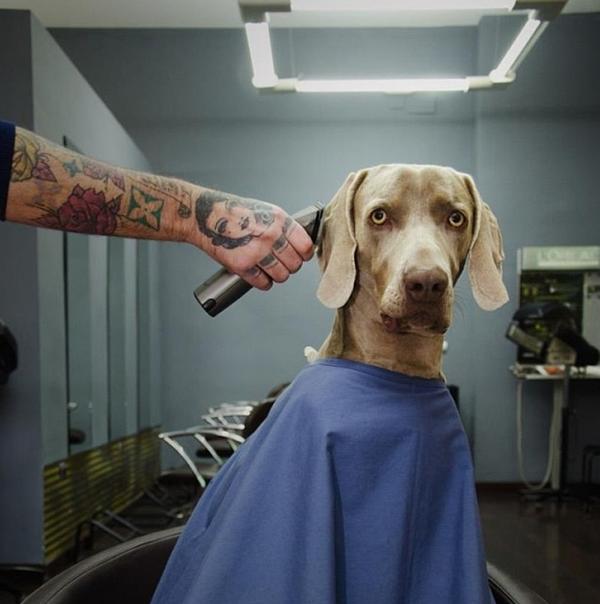 Chú chó tạo dáng chụp ảnh trên Instagram có 3,5 triệu fan 8