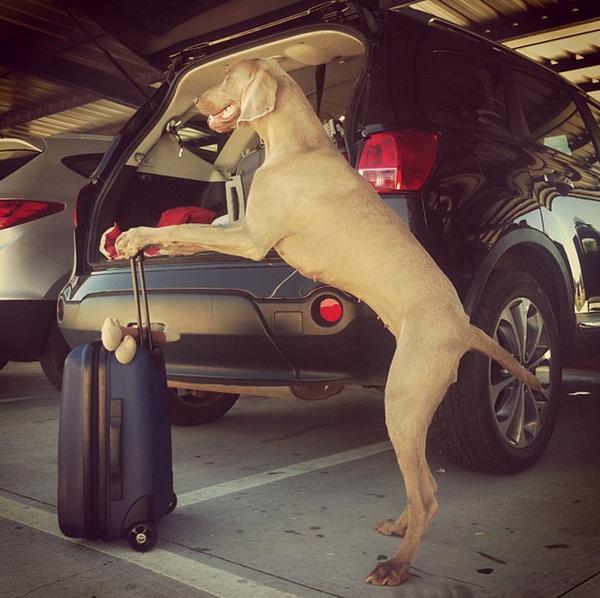 Chú chó tạo dáng chụp ảnh trên Instagram có 3,5 triệu fan 11