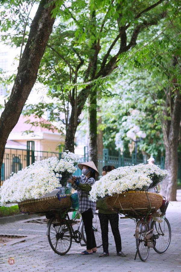 Chùm ảnh: Cúc họa mi bồng bềnh như mây về trên phố Hà Nội 1