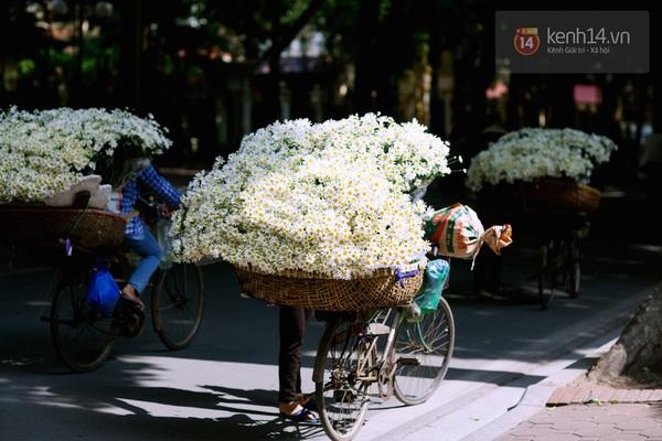 Chùm ảnh: Cúc họa mi bồng bềnh như mây về trên phố Hà Nội 4